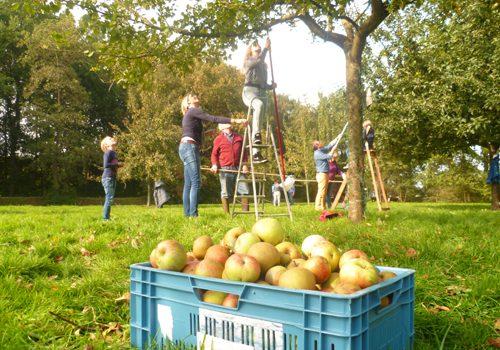 Fryske Frucht Appel-inzamelperiode in volle gang